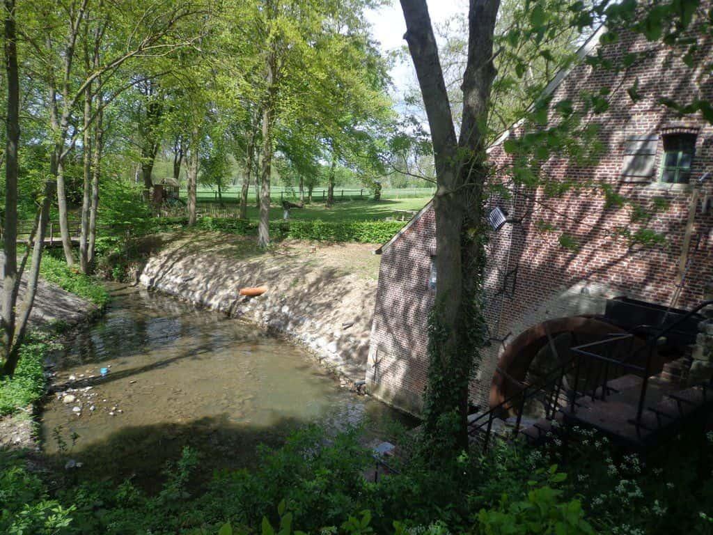 Boswandeling in de Vlaamse Ardennen
