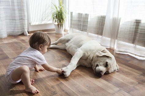 Huisdier én een kruipende baby: waar moet je op letten?