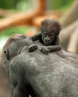 korting zoo antwerpen uitstap kinderen