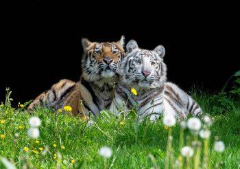 olmense zoo pakawi park doen met kinderen